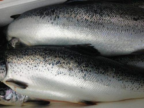 Cá hồi nguyên con mua ở đâu chất lượng tốt nhất?